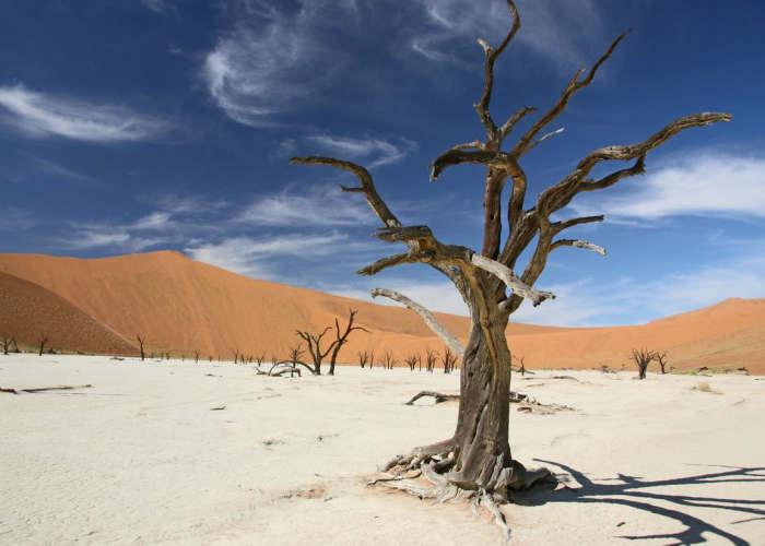 Un'acacia morta per il sole e la mancanza di acqua nella Dead Vlei in Namibia