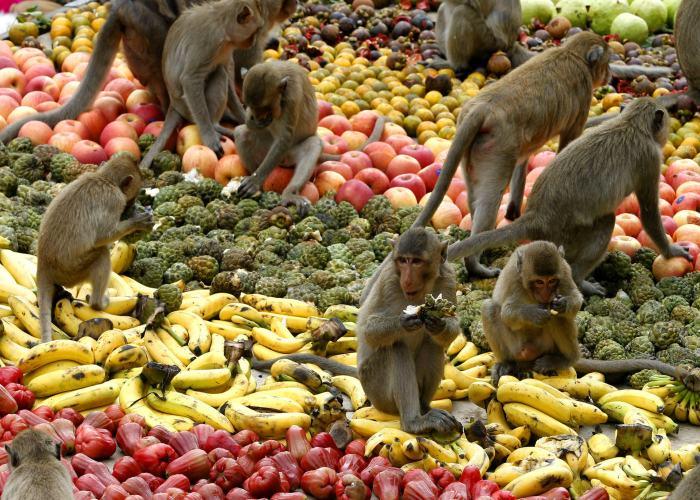 Scimmie che mangiano su un tappeto di frutta e verdura a Lopburi