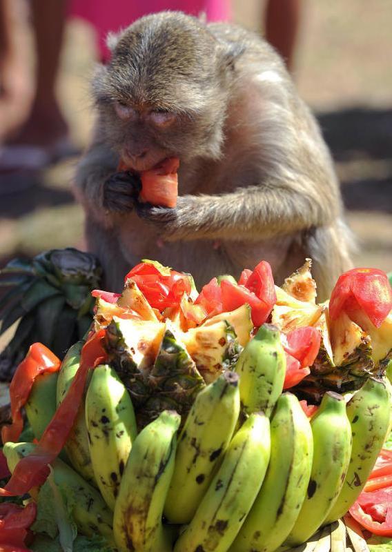Una scimmia che mangia sul tappeto di frutta e verdura creato a Lopburi