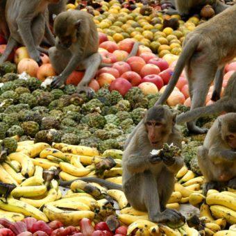 Scimmie che mangiano su un tappeto di frutta e verdura