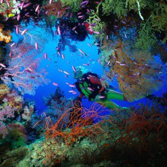 Una stupenda apertura in un muro di coralli