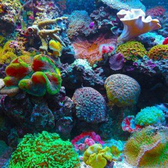 Una moltitudine di coralli molto diversi e molto colorati in Malesia