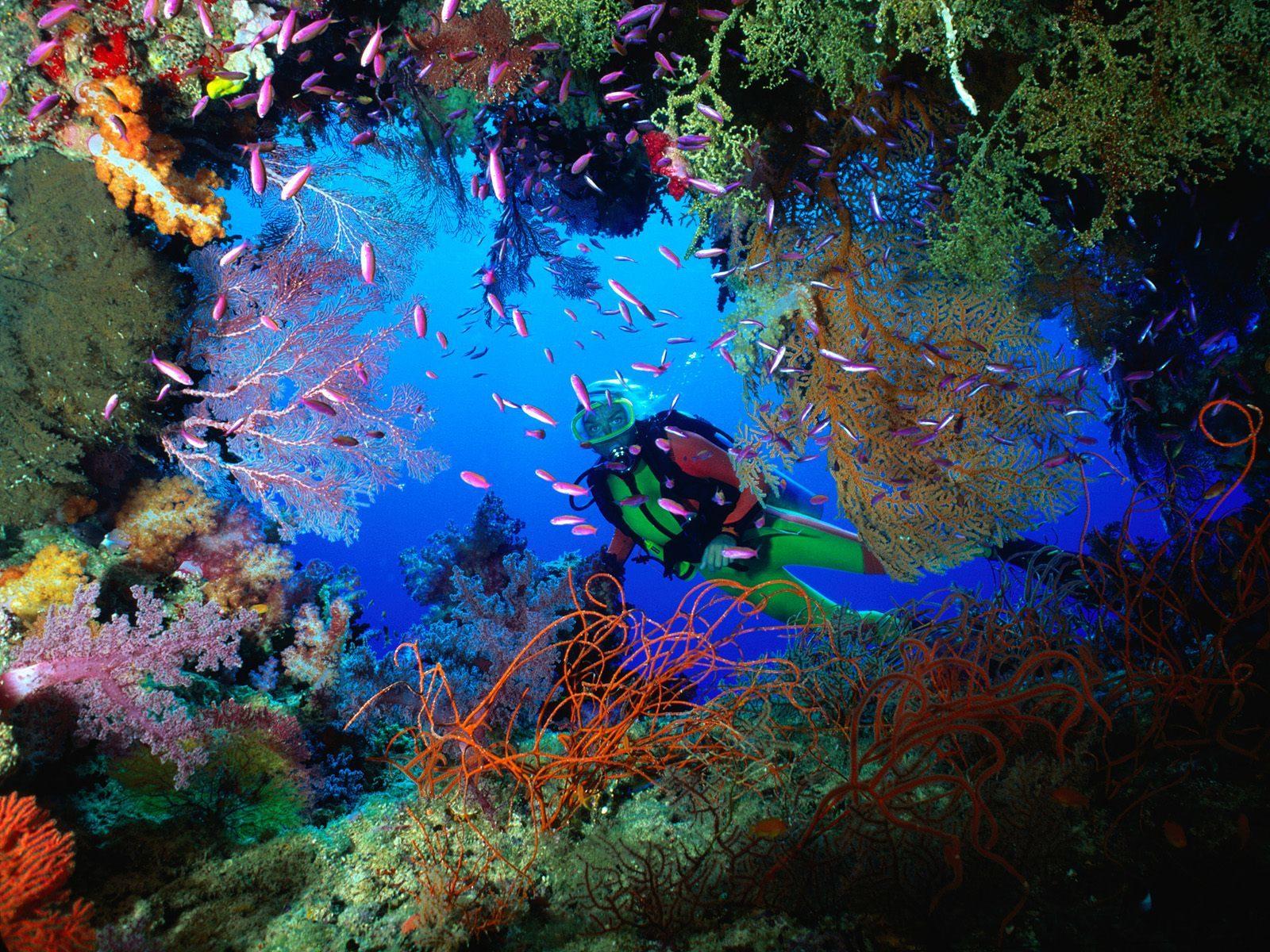 Una stupenda apertura in un muro di coralli in Malesia