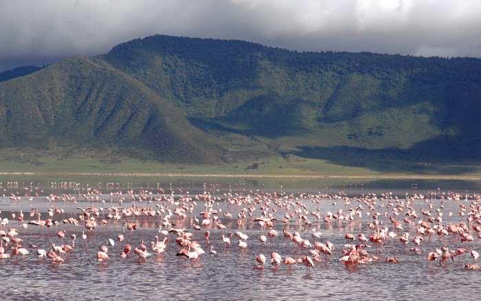 Flamingo lake, un lago tappezzato di fenicotteri in Tanzania