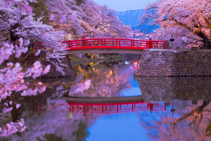 Un piccolo fiume con un ponte rosso tipico del Giappone con una cornice di ciliegi in fiore