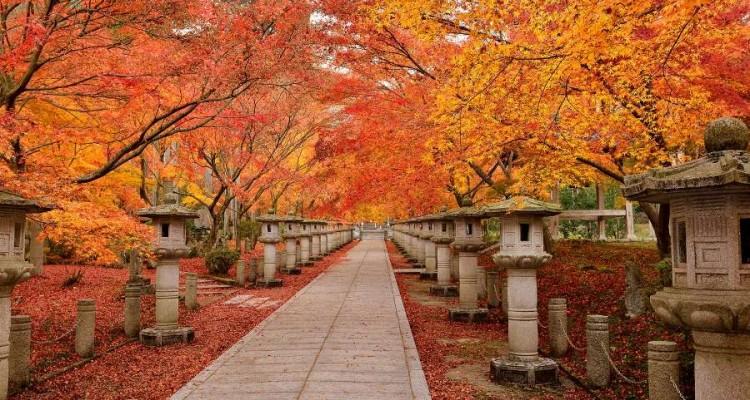 Una visuale di una stradina tipica giapponese circondata da alberi rossi