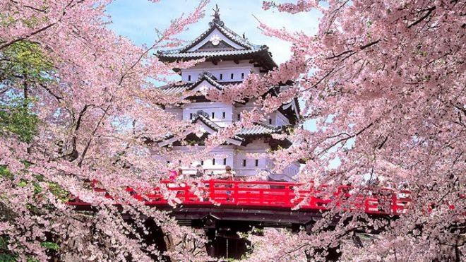 Uno scorcio di un tempio che si intravede attraverso gli alberi di ciliegio