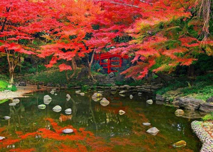 Un laghetto circondato da vegetazione di color rosso dovuto al Momijigari
