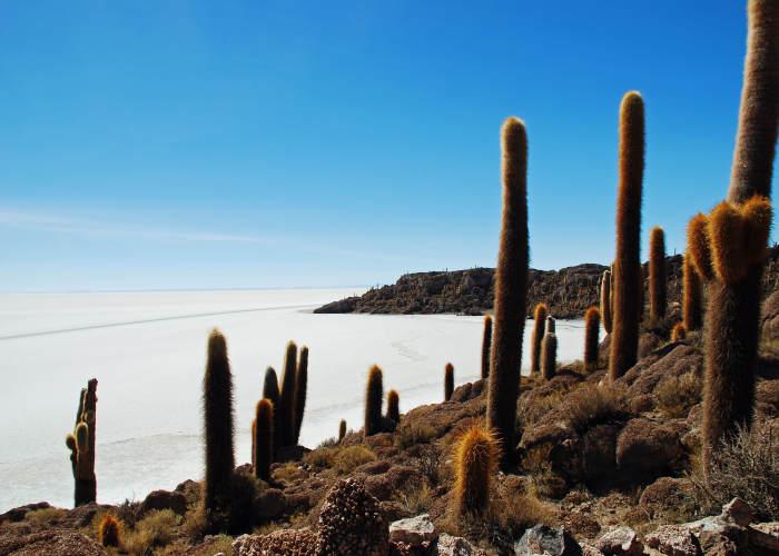 I cactus giganti dell'Isla del Pescado a Salar de Uyuni