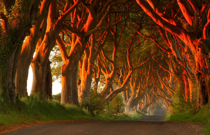 The Dark Hedges al tramonto