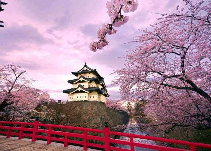 Foto di un tempio presa da un ponte rosso con degli alberi di ciliegio in fiore sulla destra in primo piano