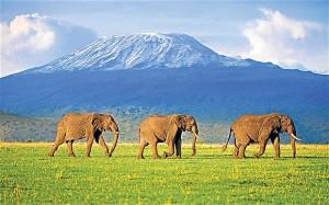 Elefanti Kenya