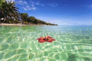 Fiji-3D2AD-Tourist