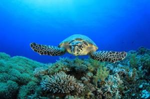 australia-sea-turtle 0