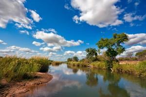 Kruger-National-Park-@Freestock.ca